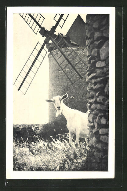AK Weisse Ziege vor einer Mühle