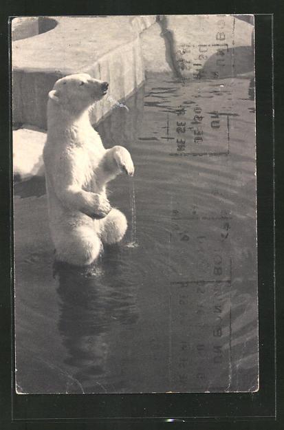 AK Eisbär im Zoologischen Garten von Paris