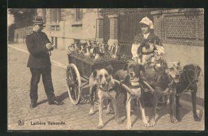 AK Laitière flamande, Milchkarren mit Hundegespann und Polizist