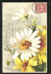 Künstler-AK Catharina Klein: Blumenstrauss mit weissen Blüten