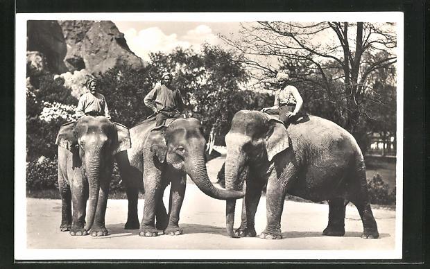 AK Hamburg-Stellingen, Hagenbeck's Tierpark, Elefanten mit Führern