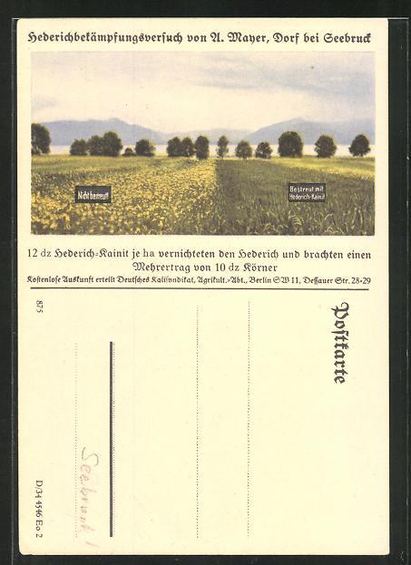 AK Dorf bei Seebruck, Hederichbekämpfungsversuch mit Hederich-Kainit, Reklame