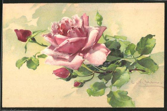 Künstler-AK Catharina Klein: rosa Rose mit Knospen
