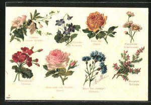 AK Blumensprache, Rose the Plaisir