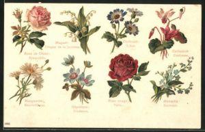 AK Blumensprache, Rose rouge