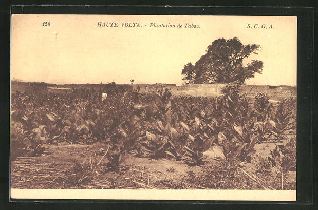 AK Haute Volta, Plantation de Tabac