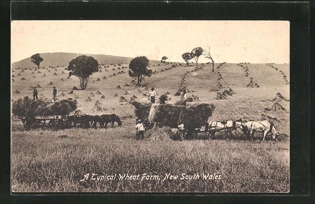 AK New South Wales, A typical wheat farm