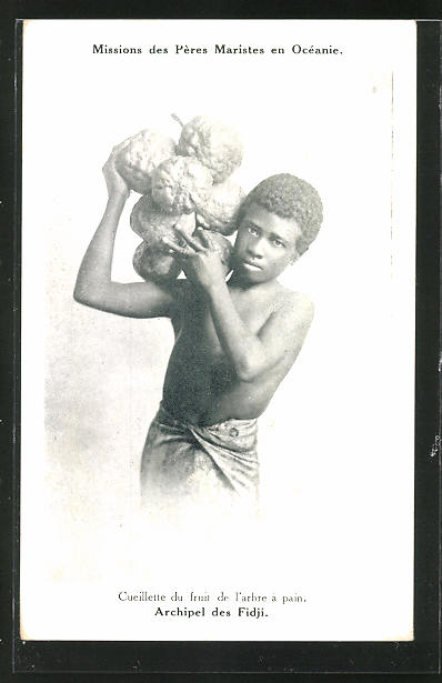 AK Fidji, Cueillette de fruit de l'arbe a pain