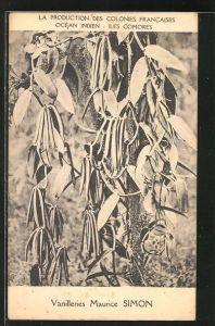 AK Iles Comores, Vanilleries Maurice Simon, La Production des Colonies Francaises Ocean Indien, Vanilleschoten