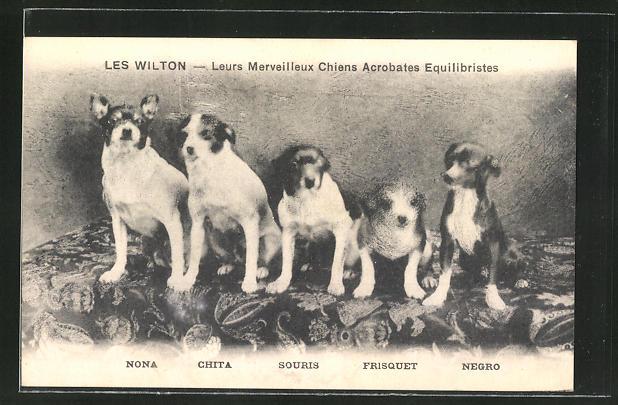 AK Les Wilton - Leurs Merveilleux Chiens Acrobates Equilibristes, dressierte Hunde