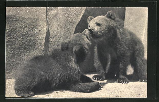 AK Paris, Ours bruns, Parc Zoologique, Bären