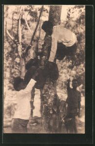 AK Timor, Junge Einheimische beid er Ernte