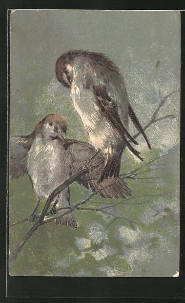 AK Vögel sitzen auf einem Ast
