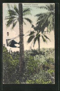 AK Monrovia, Erklettern der Palmenbäume