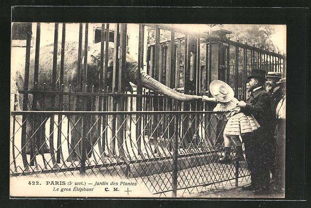 AK Paris, Jardin des Plantes, Elefant im Freigehege