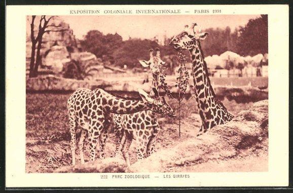 AK Paris, Parc Zoologique, Exposition Coloniale Internationale 1931, Les Girafes, Giraffen im Zoo