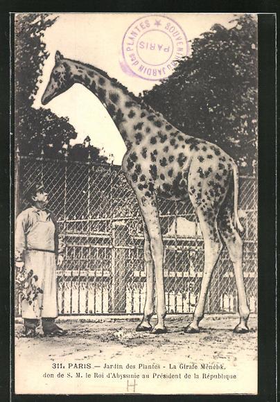 AK Paris, Jardin des Plantes, La Girafe Menelik, Giraffe im Zoo