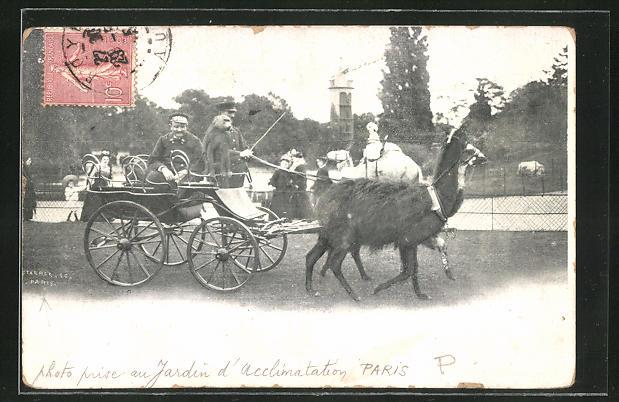 AK Paris, Wagen mit Lama im Zoo