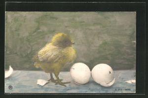 AK Osterküken steht neben Eierschalen