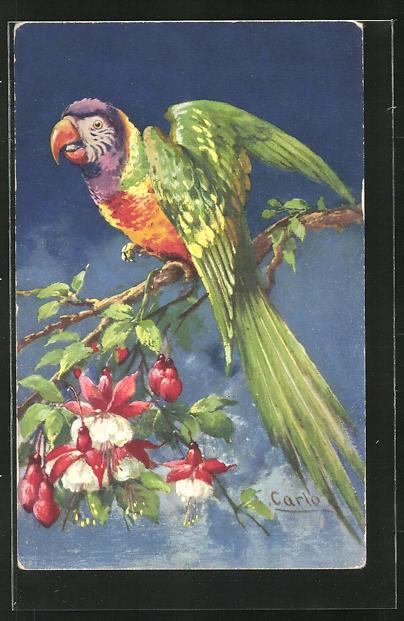 Künstler-AK sign. Carlo: Papagei auf einem Zweig