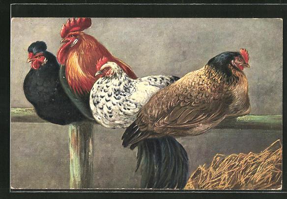 AK Hühner auf der Stange