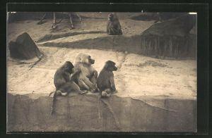 Foto-AK Affen auf Gestein im Gehege