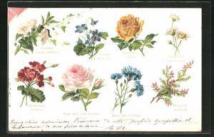 AK Blumensprache, Violette: Modestie, Rose the: Plaisir, Bruyere: Solitude