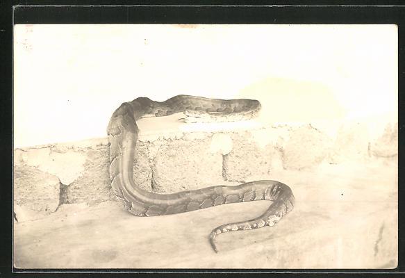 Foto-AK Schlange an einer Mauer