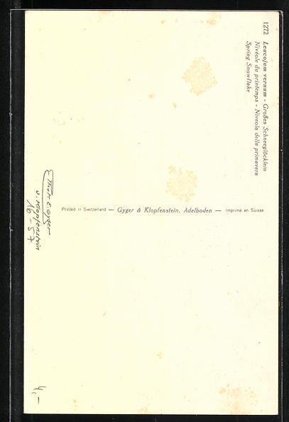 Foto-AK Emanuel Gyger: Leucojum vernum, Grosses Schneeglöckchen 1