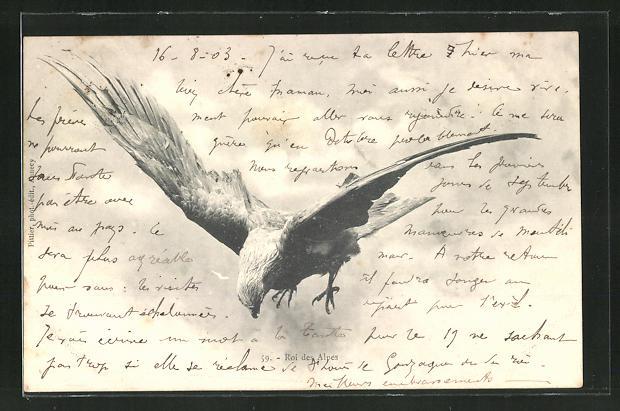 AK Ein Adler, König der Alpen