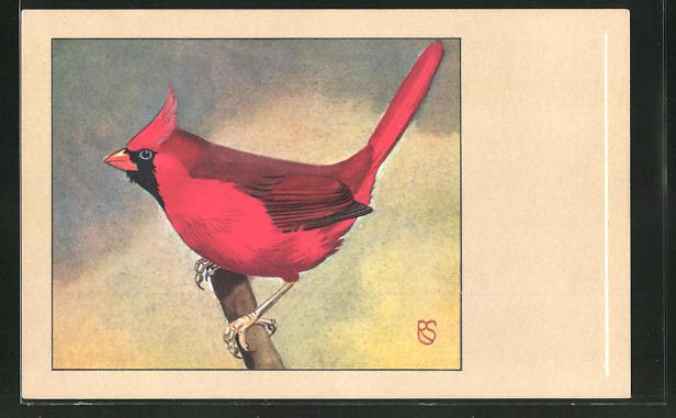 AK Roter Kardinal auf einem Ast 0