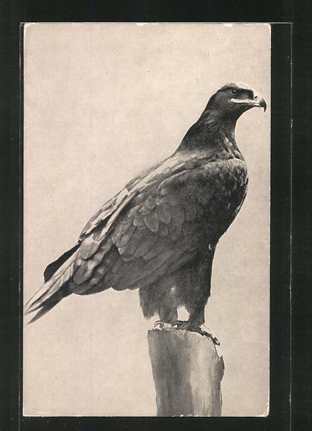 AK Adler auf Beutesuche 0