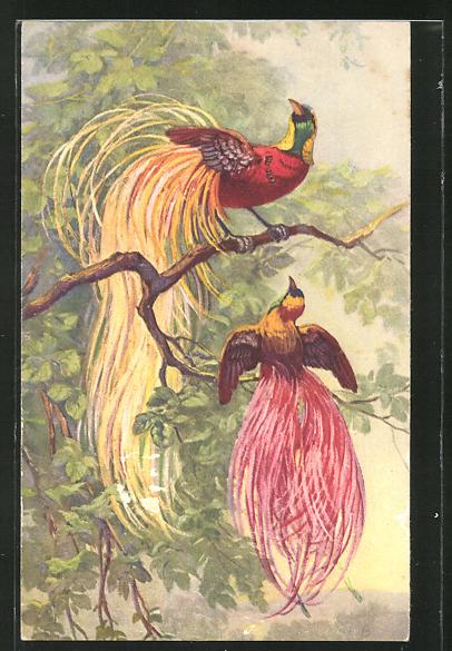 Künstler-AK Zwei Raggi-Paradiesvögel auf einem Zweig 0