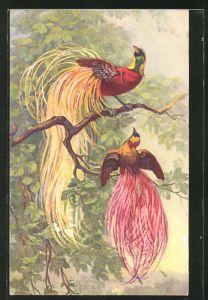 Künstler-AK Zwei Raggi-Paradiesvögel auf einem Zweig