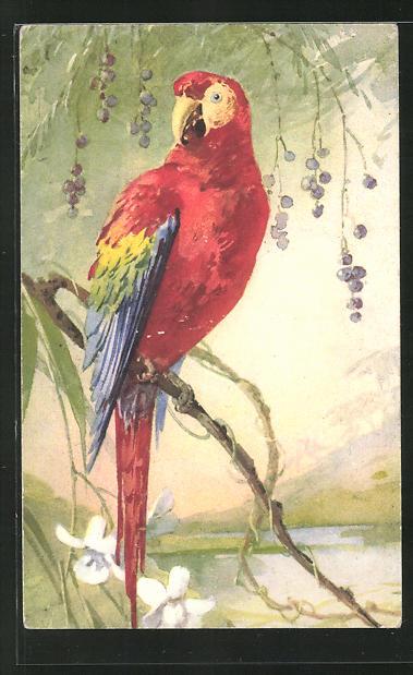 Künstler-AK Ein Papagei auf einem Ast sitzend