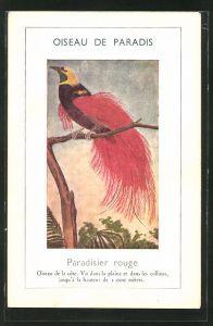 Künstler-AK Ein Paradiesvogel auf einem Ast sitzend