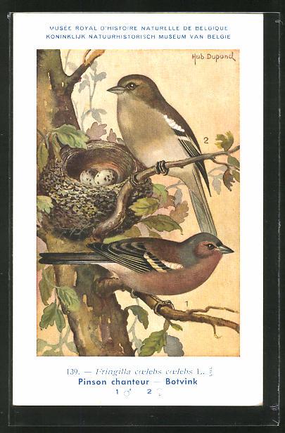 Künstler-AK Ein Buchfinkenpaar am Nest 0