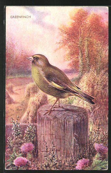 Künstler-AK Ein Grünfink auf einem Holzpfahl 0