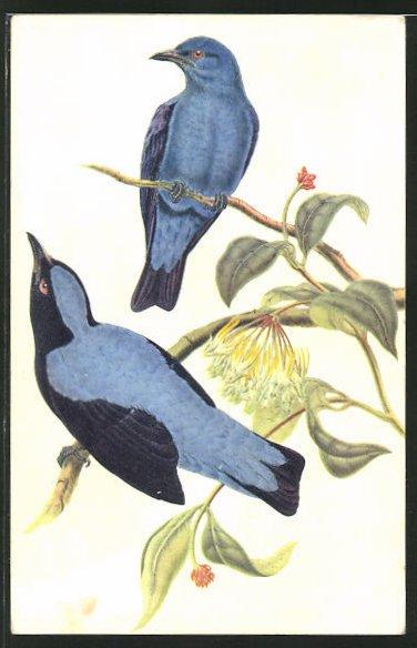 Künstler-AK Elfenblauvögel auf Zweigen 0