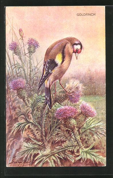 Künstler-AK Ein Goldfink auf einer Distel 0