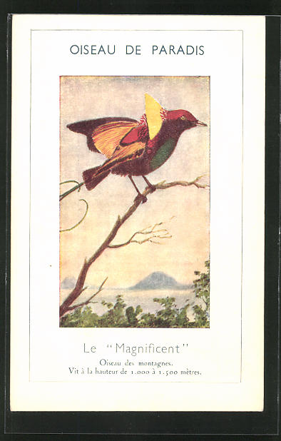 AK Le Magnificent, Vogel auf einem Ast 0