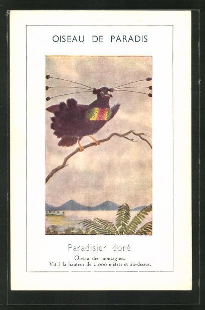 AK Paradisier dore, Vogel auf einem Zweig 0