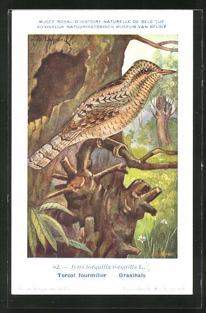 AK Torcol fourmilier, Daaihals, Vogel auf einem Zweig