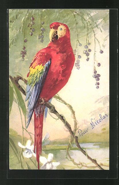 AK Papagei auf einem Zweig 0