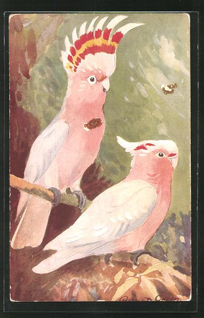 AK The Pink Cockatoo, Kakadus auf Zweigen