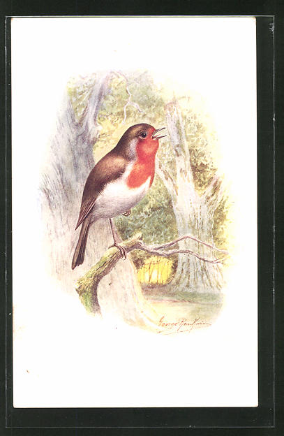 AK Robin, Vogel im Wald 0