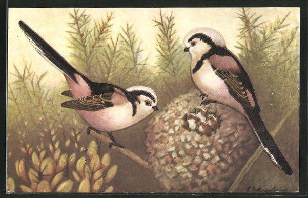 AK La Mesange a Longue Queue, Vögel mit Nest