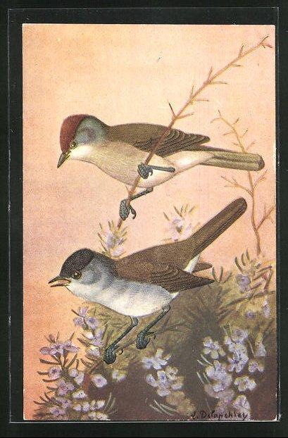 AK La Fauvette a Tete Noire, 2 Vögel auf Zweigen 0