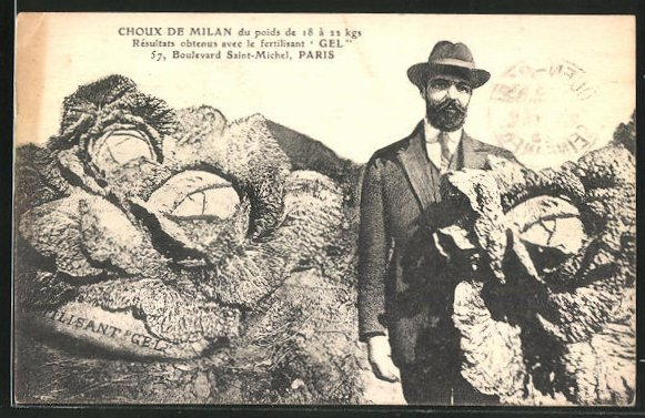 AK Choux de Milan du poids de 18 a 22kgs, fertilisant