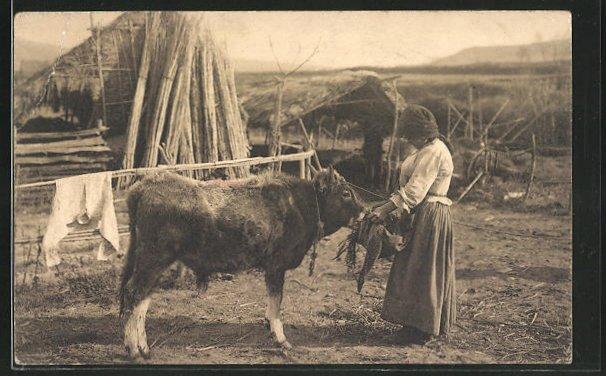 AK Bäuerin füttert kleinen Ochsen